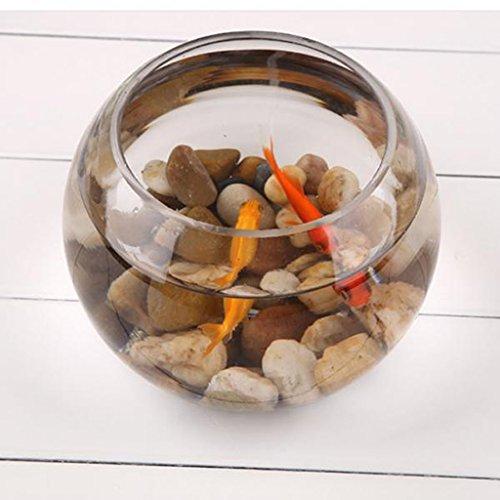 B Blesiya Goldfischglas Fischglas Fisch Tank Transparente Runde Vase Blumenvase