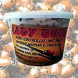 Bazos 1500 Live Ladybugs - Good Bugs - Ladybugs - Ladybugs for Garden - Guaranteed Live Delivery (1500)