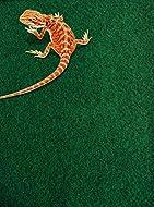 Komodo Reptile Carpet, 120 x 60 cm, Reptile Substrate, Great for all Terrariums and Vivariums