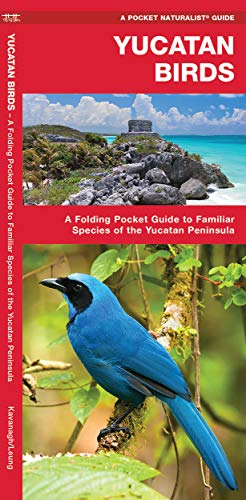 Yucatan Birds: A Folding Pocket Guide to Familiar Species of the Yucatan Peninsula (Pocket Naturalist Guide) [Idioma Inglés]
