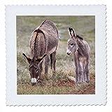 3dRose South Dakota, Custer SP, Wild Burros, Esel – Us32