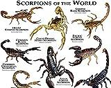 AZSTEEL Scorpions of The World Poster Print