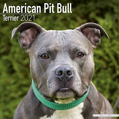 American Pit Bull Terrier Calendar - Dog Breed Calendars - 2020 - 2021 wall calendars - 16 Month by Avonside