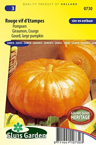 Gourd Rouge VIF d'Etampes
