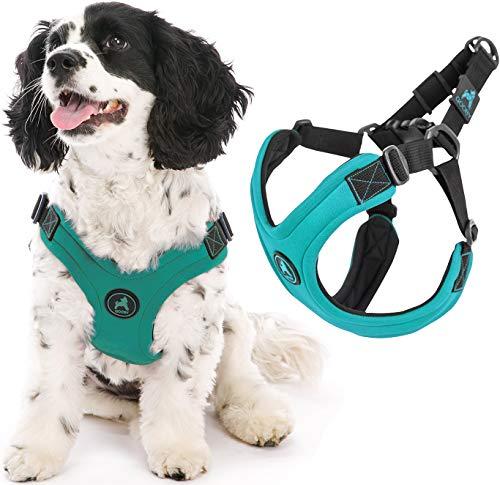 Gooby - Escape Free Sportgeschirr für kleine Hunde, Neoprengeschirr für Hunde, die ihrem Geschirr gerne entfliehen, Türkis, Größe S
