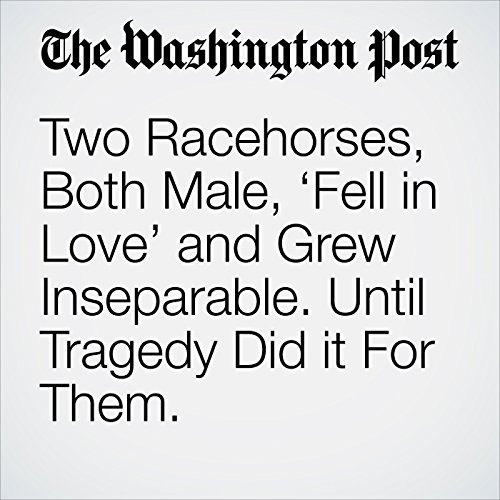 Two Racehorses, Both Male, 'Fell in Love' and Grew Inseparable. Until Tragedy Did it For Them. copertina