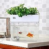 Système de culture hydroponique auto-nettoyant pour plantes d'aquarium