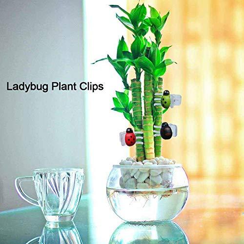 Urbenlife 30 stuks lieveheersbeestjes orchidee clips plantentuin ondersteuning clips voor plantenwijnstokken tuin bloemen ondersteuning kunststof presenteermiddelen