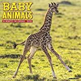 Baby Animals 2020 Wall Calendar
