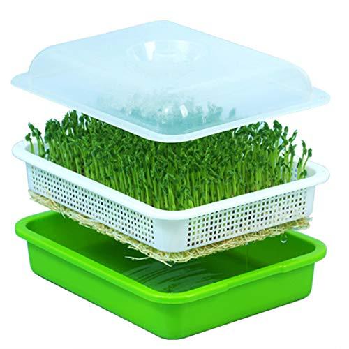 Huntfgold - Vassoio per germogli, coltivatore di erba di grano sana, in materiale PP, senza BPA, con coperchio Weiß&grün