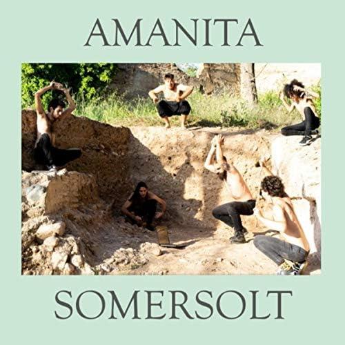 Amanita Somersolt