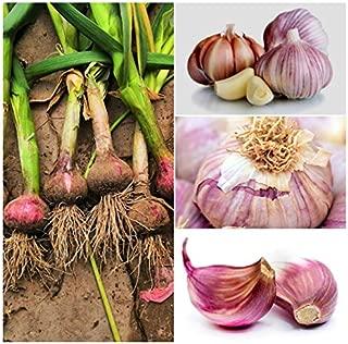 2pcs Garlic Bulbs Naturally Organic Healthy Non-GMO Perennial Vegetable High Germination Rate Plant Bulbs Home Garden