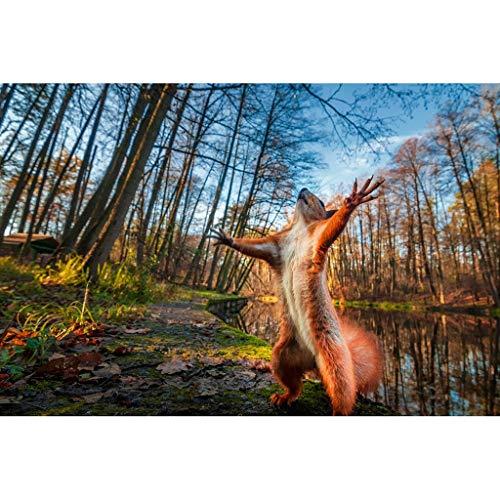 Puzzle 1000 Teile, Rotes Eichhörnchen Ideal Puzzle für Erwachsene Kinder,Impossible Puzzle,Geschicklichkeitsspiel für die ganze Familie,Farbenfrohes Legespiel,Papier Große Puzzle,69x51cm / 27x 20 inch