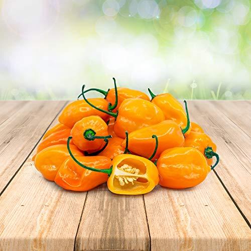 Habanero Orange 25 x Samen aus Portugal 100% Natürlich ohne Chemische Anzuchthilfe oder Gentechnik