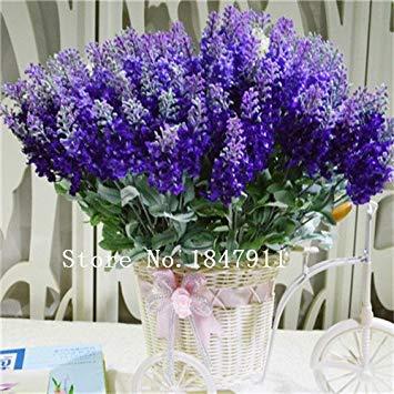 Grande vente 500pcs graines de lavande herbe graine jardin balcon pot Four Seasons graines de fleurs