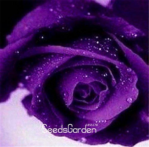 Nouvelle arrivée! 100 Pcs / Paquet Bleu et Rose Rose Seeds, couleur rare, riche en arôme, bricolage jardin Rose usine promotion fou, # J6M5KE