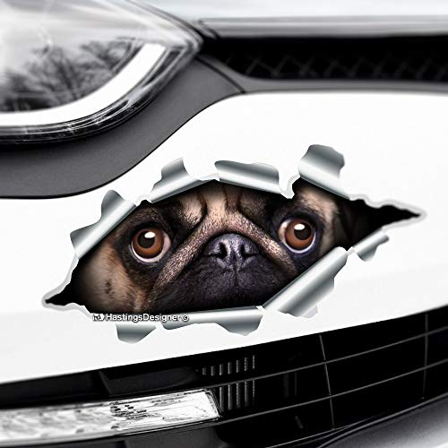 HastingsDesigner TORN RIPPED 3D EFFECT PEEKING PUG Funny Novelty Car,Bumper Vinyl Decal Sticker