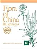 Flora of China Illustrations, Volume 16: Gentianaceae Through Boraginaceae