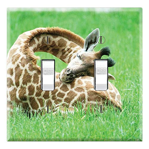 Sleeping Baby Giraffe
