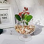 luckybaby-shell-crushed-shells-chips-bulk-natural-colorful-for-diy-succulent-vase-filler-21oz-natural