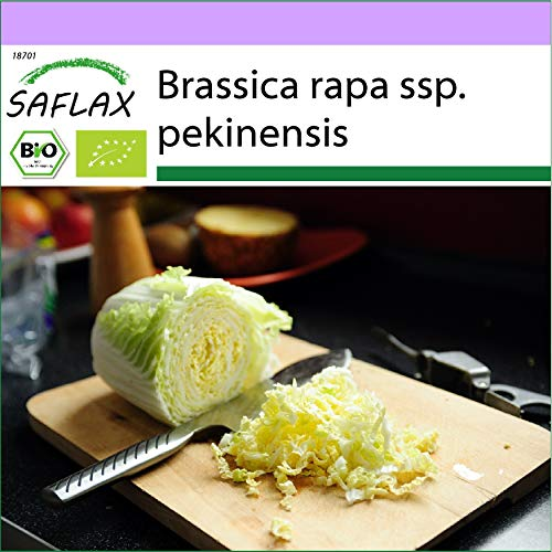 SAFLAX - BIO - Chinakohl - Granat - 40 Samen - Brassica rapa