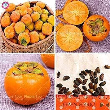 Vistaric 30pcs Semillas de árboles frutales de caqui - Diospyros Kaki Semillas de caqui Semillas de frutas sin OGM de alta calidad Home Garden Plant