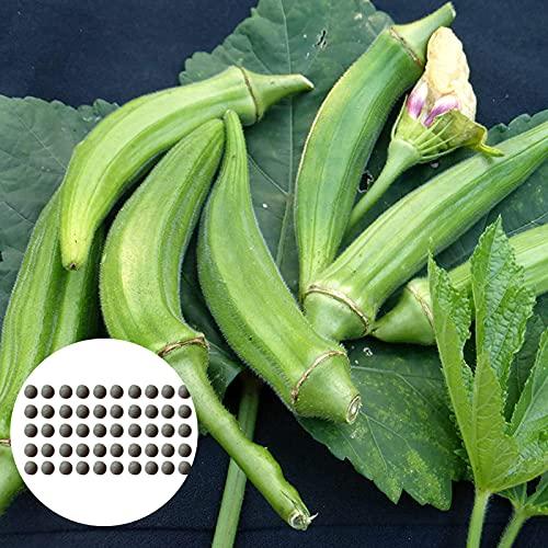Semillas de frutas de flores 50pcs / bolsa Okra semillas