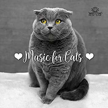 ❤Music for Cats❤ Sweet Sounds for Sleep, Relief in Anxiety and Stress & Pets Therapy