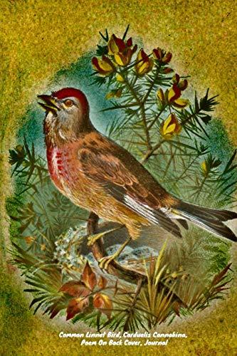Common Linnet Bird, Carduelis Cannabina, Poem On Back Cover, Journal: Small Passerine, Bird Of The Finch Family, Fringillidae, Linaria,