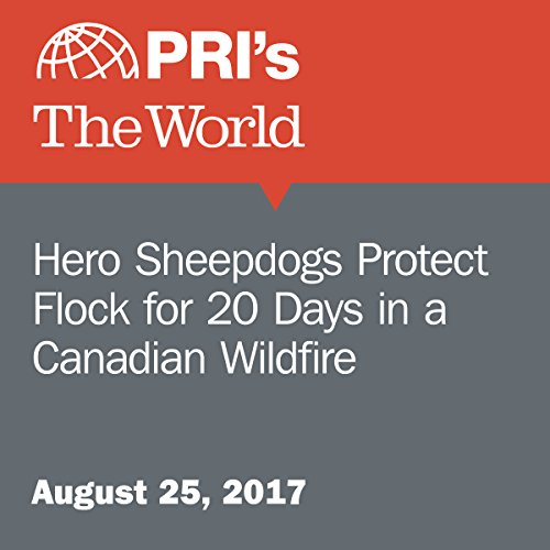 Hero Sheepdogs Protect Flock for 20 Days in a Canadian Wildfire audiobook cover art