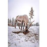 SYLSBAZGYS Wildtier Polar Ziege Poster Leinwand Malerei