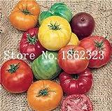 Pinkdose 100 teile/beutel Rainbow Tomato Bonsai, seltene Tomatenpflanze, Bonsai Bio-Gemüse & amp; Obstbonsai, Topfpflanze für Haus & Garten: 18