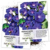 Seed Needs, Grandpa Ott Morning Glory (Ipomea purpurea) Twin Pack of 100 Seeds Each