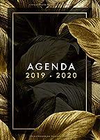 Amazon.es: agenda universitaria estresada
