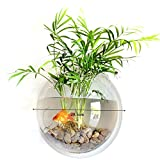 Transparent Acrylique Ronde Mur Suspendu Fish Bowl Aquarium Réservoir pour Poisson d'or et Béta Plante Vase Décoration Pot Pot, 29.5 cm Diamètre