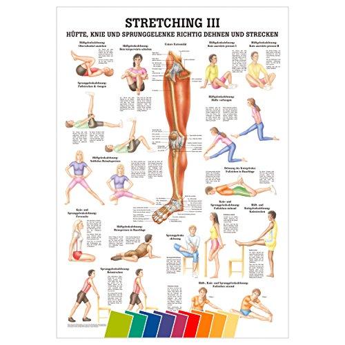 Sport-Tec Stretching III Mini-Poster Anatomie 34x24 cm medizinische Lehrmittel