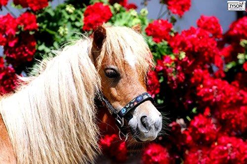 Halfter Blümi Minishetty Fohlen Falabella Mini Pony Shetty Minipony Schwarz mit Blümchen Tysons (MMS)