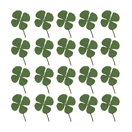 HEALLILY 24 unidades prensadas flores secas de cuatro hojas trébol de la suerte trébol para artesanía artística DIY resina joyas collar pulsera hacer