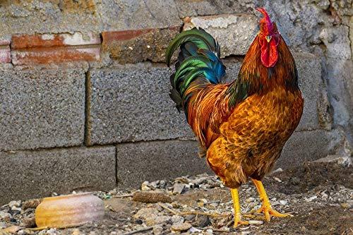 Mddjj Juegos de Pintura por números Plumas Animales Granja Aves Kits de Pintura para Bricolaje por números