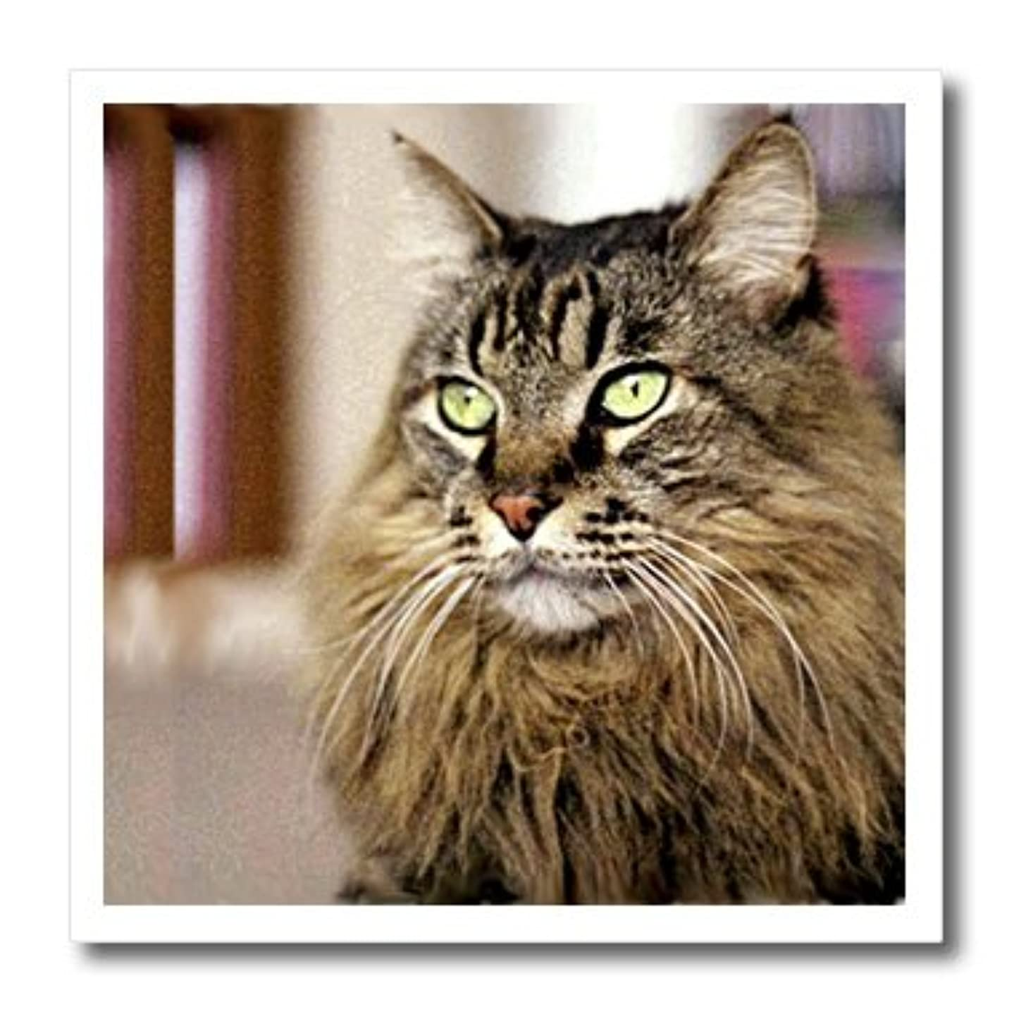 3dRose LLC ht_305_1 Maine Coon Iron on Heat Transfer Paper, 8 by 8-Inch