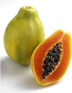 Best papaya fruit plant Reviews