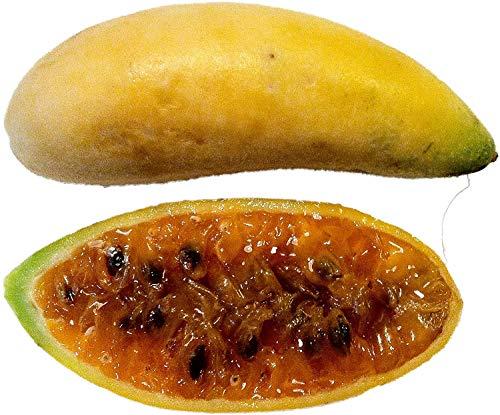 Bananen Passionsfrucht -Leckere Früchte und schöne Blüten- * passiflora mollissima *