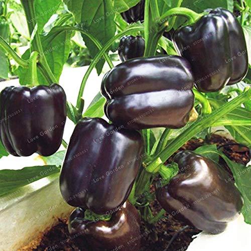 Shopvise de piment de semences de légumes 100 unités; couleur 6