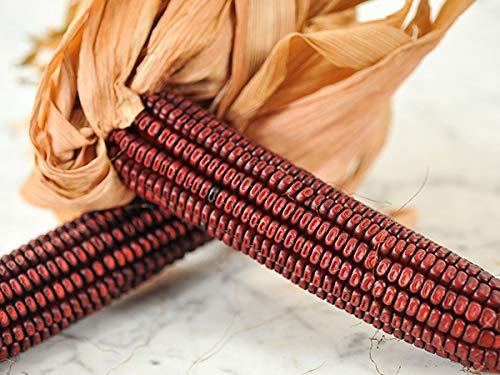 David's Garden Seeds Corn Dent Bloody Butcher 6674 (Red) 100 Non-GMO, Heirloom Seeds