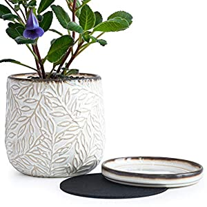 6 Inch Embossed Leaves Design Stoneware Planter Pot with Drainage Hole and Saucer