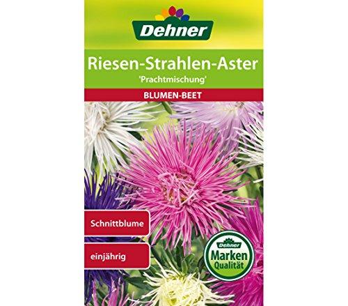 Dehner prachtmengsel bloemenzaad, reuzenstralen-pak van 5 (5 x 0,9 g)
