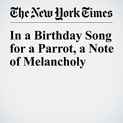 In a Birthday Song for a Parrot, a Note of Melancholy audiobook cover art