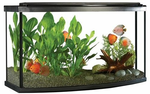 Fluval Premium Bow Front Aquarium Kit w/LED, 45 Gallon (170L)