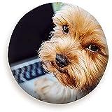 MOLLUDY Funda de Rueda de Repuesto Retrato Perro Yorkshire Terrier Frente con Computadora Portátil con Animales Funda de Llanta de Repuesto Cubierta de llanta de refacción 14/15/16/17 Inch
