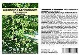 Seedeo® Japanische Schnurbaum 30 Samen